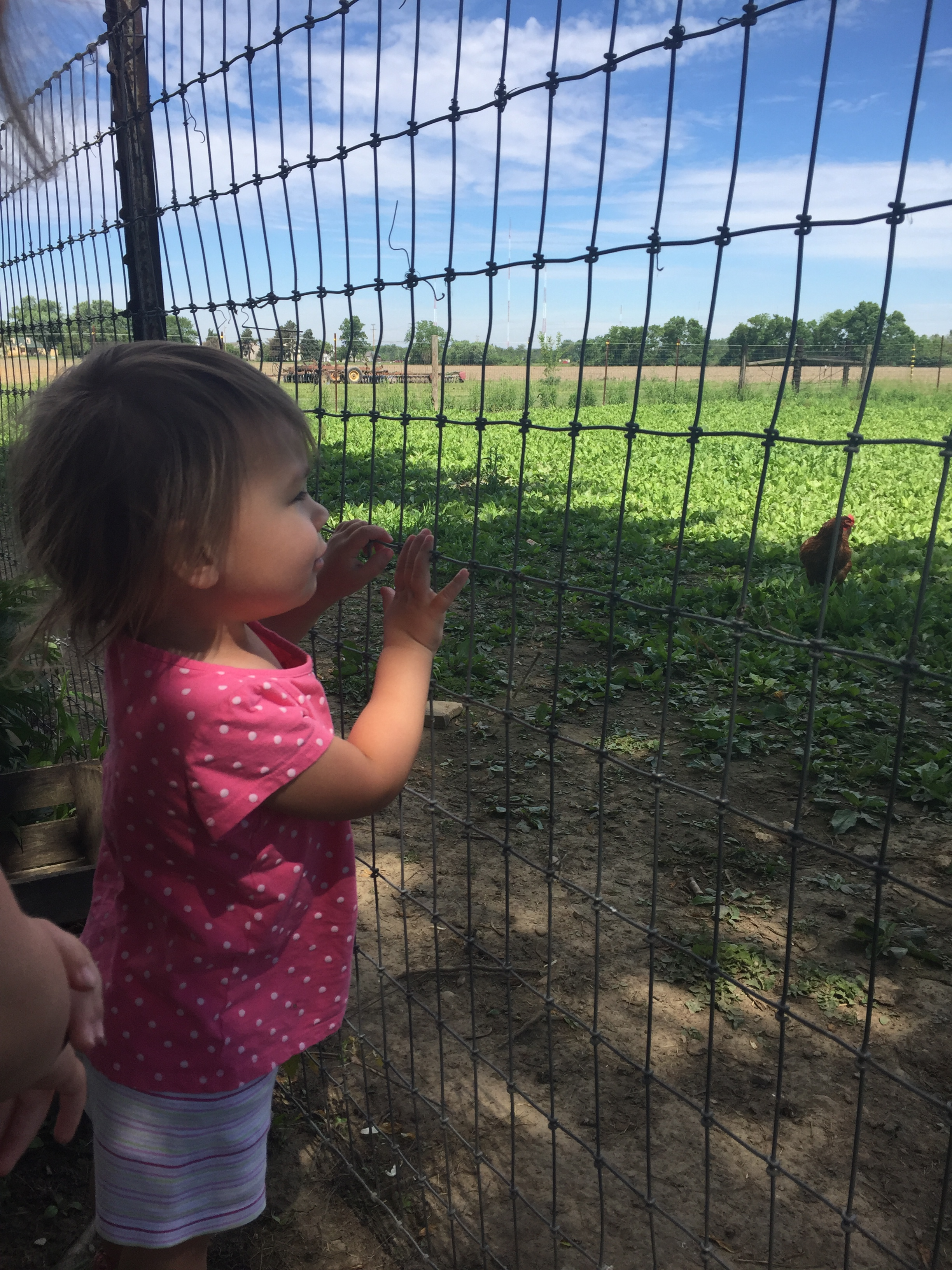 Strawberry picking is an awesome summer activity for kids and families! Get outdoors and enjoy the sunshine while eating healthy and teaching kids about where food comes from!