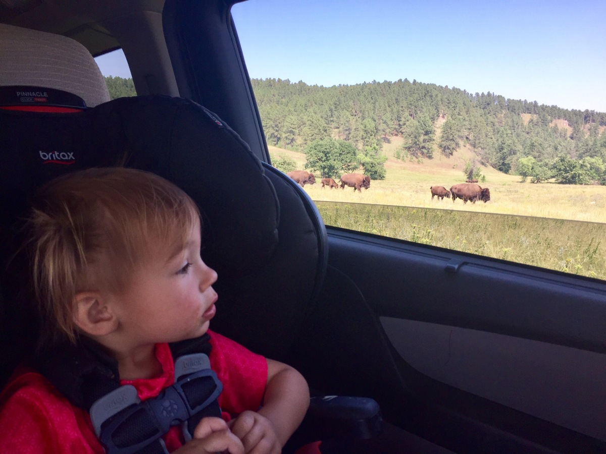 One day in Custer State Park, South Dakota, with Kids